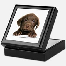 Chocolate Labrador Retriever puppy 9Y270D-050 Keep