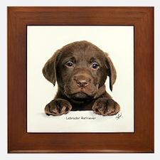 Chocolate Labrador Retriever puppy 9Y270D-050 Fram