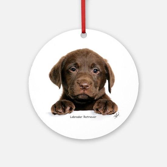 Chocolate Labrador Retriever puppy 9Y270D-050 Orna