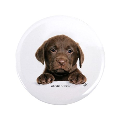 """Chocolate Labrador Retriever puppy 9Y270D-050 3.5"""""""