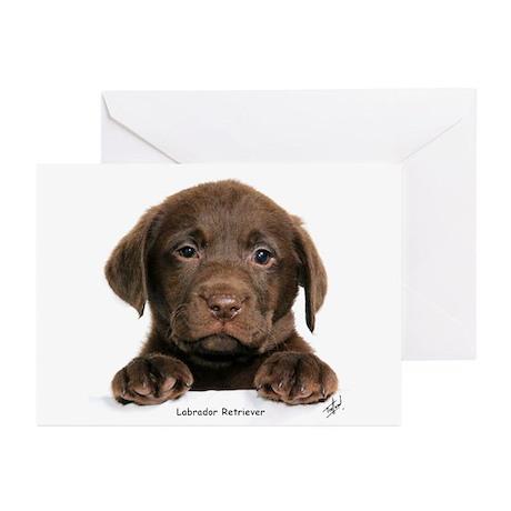 Chocolate Labrador Retriever puppy 9Y270D-050 Gree