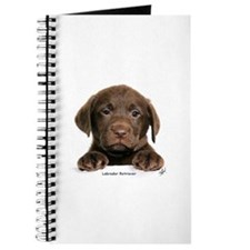 Chocolate Labrador Retriever puppy 9Y270D-050 Jour
