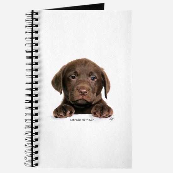 Chocolate Labrador Retriever puppy 9Y270D-050 Jour