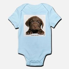 Chocolate Labrador Retriever puppy 9Y270D-050 Infa