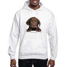 Chocolate Labrador Retriever puppy 9Y270D-050 Hood