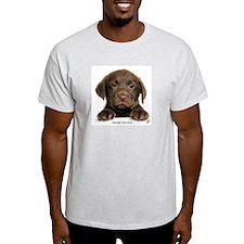 Chocolate Labrador Retriever puppy 9Y270D-050 Ligh