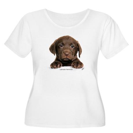Chocolate Labrador Retriever puppy 9Y270D-050 Wome