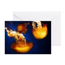 Pacific Sea Nettles Greeting Card