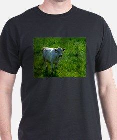 Charolais cow in field T-Shirt