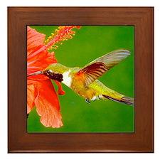 Cute Hummingbird Framed Tile