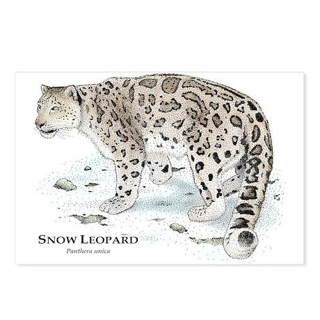 snow leopard essay