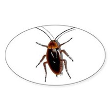 Cockroach Oval Decal