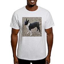 Boston Terrier Pup2 Ash Grey T-Shirt