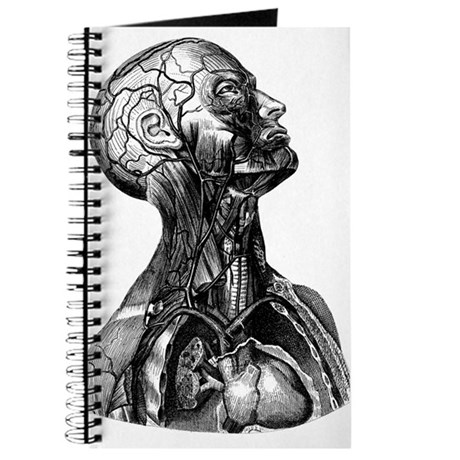 Anatomy Journal