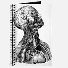 Anatomy Journal