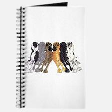 N6 Colors Journal