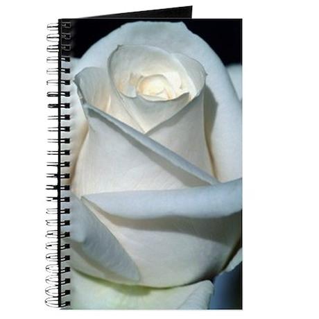 White Rose closeup journal