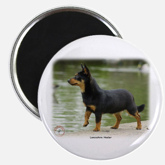 Lancashire Heeler 9R038D-013 Magnet