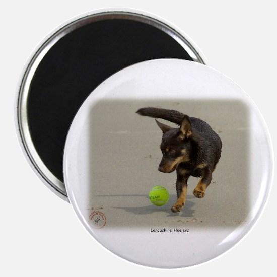 Lancashire Heeler 9R056D-248 Magnet