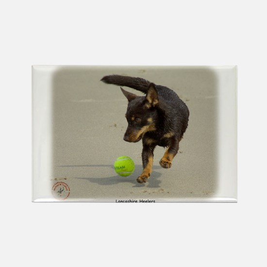 Lancashire Heeler 9R056D-248 Rectangle Magnet (10