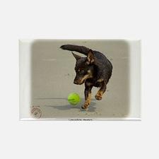 Lancashire Heeler 9R056D-248 Rectangle Magnet (100