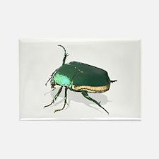 June Beetle Cotinus nitida Rectangle Magnet