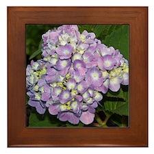 """""""hydrangea""""Framed Tile"""