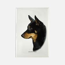 Lancashire Heeler 9W085D-090 Rectangle Magnet (100