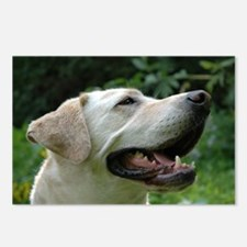 Unique Yellow lab photography Postcards (Package of 8)