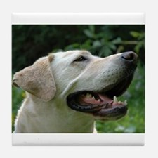 Funny Yellow lab photography Tile Coaster