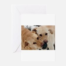 Unique Yellow lab photography Greeting Cards (Pk of 10)