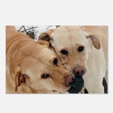 Cute Yellow lab photography Postcards (Package of 8)