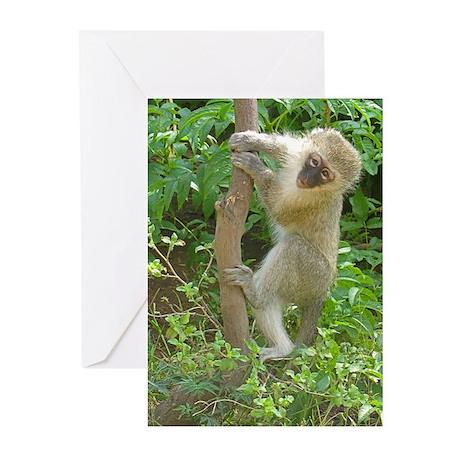 Vervet Climbing Greeting Cards (Pk of 20)