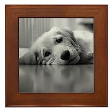 Tired Golden Retriever Puppy Framed Tile