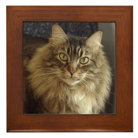 Maine Coon Cat Framed Tile