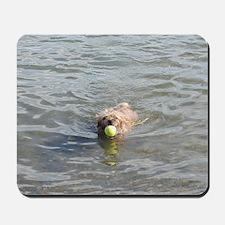 Cairn Terrier Aquatics Mousepad