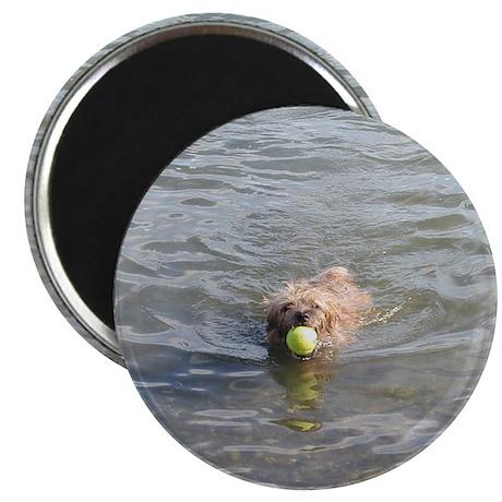 Cairn Terrier Aquatics Magnet