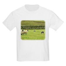 Border Collie 8M051D-10 T-Shirt