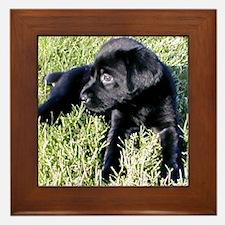 Coal Puppy Framed Tile