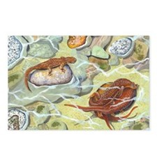 Newts Postcards (Package of 8)