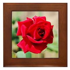 Rose of Perfection Framed Tile