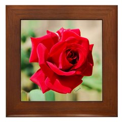 Rose of Perfection Framed Tile