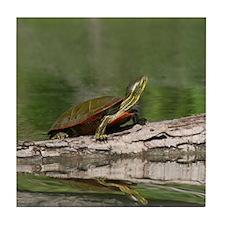 Turtle Sunning, Tile Coaster