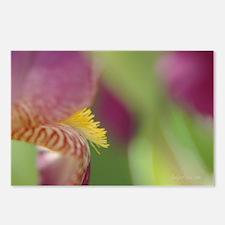 Sassy Iris Postcards (Package of 8)