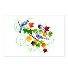 Blue Jays Postcards (Package of 8)
