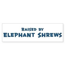Raised by Elephant Shrews Bumper Bumper Sticker
