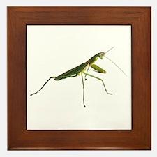 Praying Mantis Framed Tile