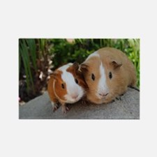 Super Cute Pair of Guinea Pigs Magnets