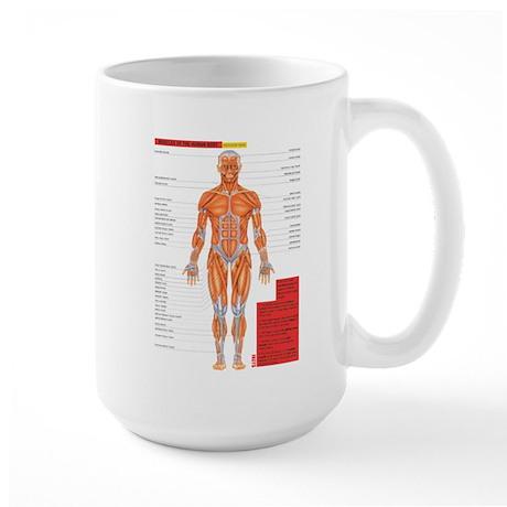 2-MuscleAnterior Mugs