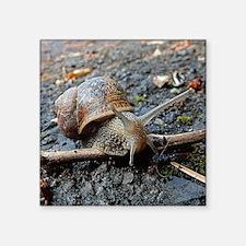 Sammy the Snail Sticker